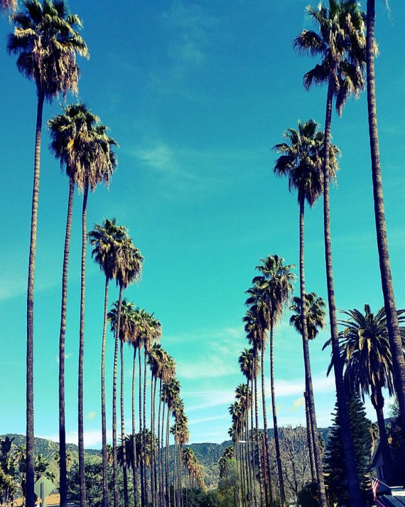 California Palm Trees Stock Images, Royalty-Free Images &- Vectors ...