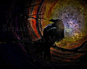 Night Crow ~ Digital Download ART ~ Painted Canvas with Digital Texture