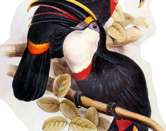 Toucans - a 250 piece Wooden Jigsaw Puzzle from BCB Puzzles