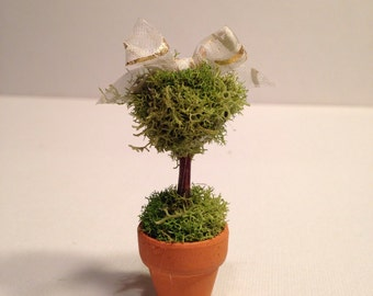 Miniature Topiary
