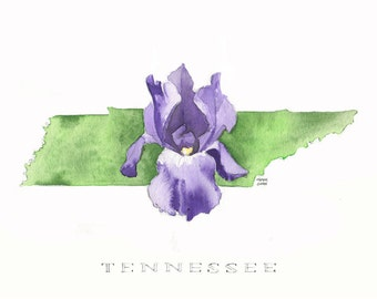 Tennessee Series: The Iris