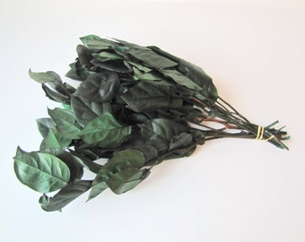 Salal  - Dried and Preserved Salal - Dried Salal Leaves - Salal Leaves Hunter Green Color - Dried Foliage - DIY Fowers - Dried Greenery