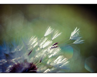 Dandelion Photograph, Blowing Seed Macro Photo Print, Wishing Seed Picture, Horizontal Wall Art, Ethereal Photography, Nature Photograph