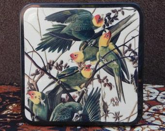 Vintage Black Trinket Box with Audubon Carolina Parrots Fine Art Image on Top