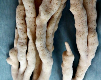 Large finger sponge_beach decor and supply_sea life decor5)