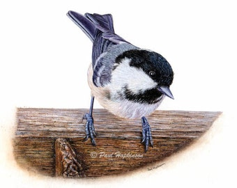 Bird Watercolor Print, Coal Tit, Art Print, Chickadee Family, British Bird Painting, A4 or A5 Size