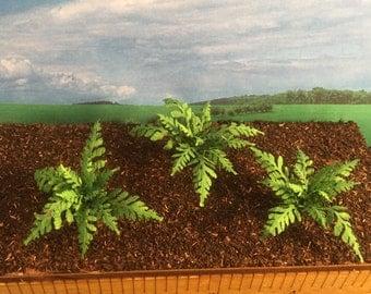 Ferns - miniature
