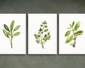Herb print set 3, Kitchen print, Botanical print, Mint poster, Sage painting, Parsley watercolor, Food art, Kitchen decor, Green artwork