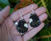 Delias Butterfly Wing - Jewelry - Earrings - Resin - Natural History - Museum - Oddity Curiosity