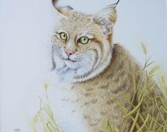 Bobcat - original watercolor painting