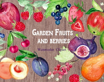 Garden fruits and  berries watercolor watercolor clipart. Digital clipart hand drawn. Romantic wedding, fresh red fruits, fruit logo, juicy