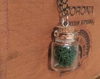 Bottled reindeer moss