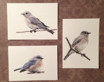 Set of 6 or 12 Handmade Blank Bluebird Print Note Cards
