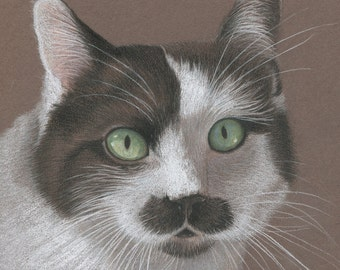 Custom Pastel Pet Portraits , Cat Portrait Drawing, Tuxedo Cat
