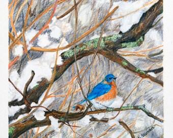 "Original Bluebird Drawing, ""Bluebird in Winter Snow"""