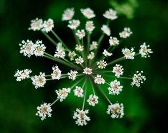 Green, original fine art photography, print, scotland, highlands, plant, nature, flower, uk, macro, cairngorms, boat of garten, spey