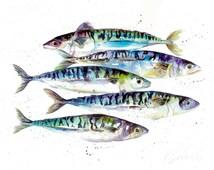 A3 watercolour Mackerel fish art print . Collectable Watercolour marine life print from original by Nicola Jane rowles
