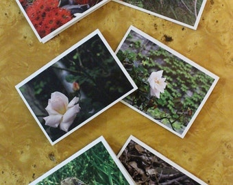 Greeting Cards - Nature Series