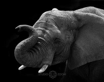 African Elephant Trunk Photography Print, Wildlife and Animal Home Decor, Wall Art