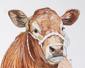 Scottish Ginger Cow Drawing