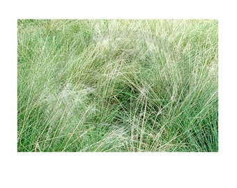 green grass-windy-digital photo-download-background-instant print-abstract-texture-design element-collage-overlay-green grass earth tones,