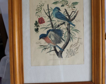 HALF SALE SIGNED Painting 2 of a Series of 7, by Arthur Singer, Honored by The Audubon Society, Painting of 2 Blue Birds, w Latin Names