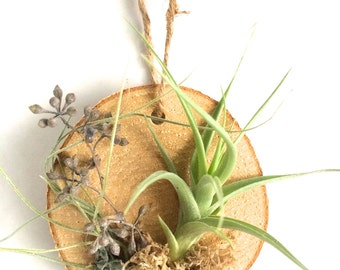 Wooden Air Plant Ornament