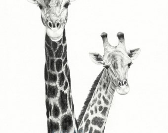 Giraffe Drawing, Two Giraffes Fine Art Pencil Drawing, Giraffe Art, African Animal Drawing, Animal Art