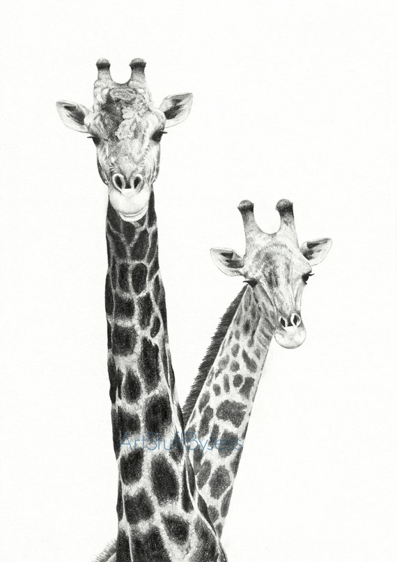 Giraffe drawing two giraffes fine art pencil drawing giraffe - Dessins girafe ...