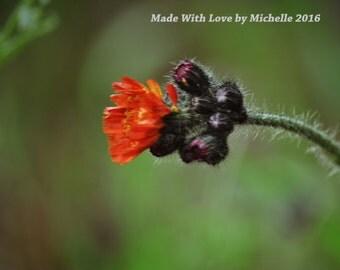 Lone Summer Flower Original Photography Glossy Print