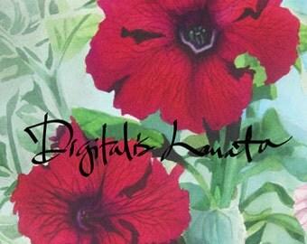 "Petunias I notecards (A7 size/5""x7"") set of 10"
