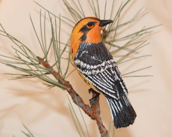 Carved Blackburnian Warbler in Pinetree