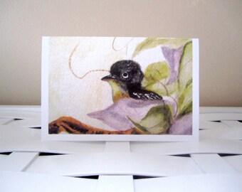 Blank 4x6 Black Bird on Branch in Spring/Summer Greeting/Note Card, Digital Print of Original Watercolor Painting, Envelope/CellophaneSleeve