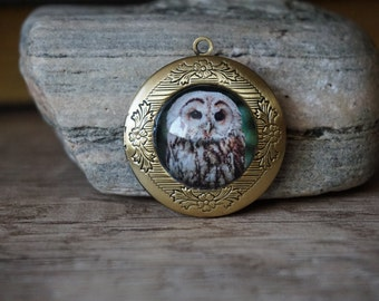 "Gold Medallion ""Owl"""