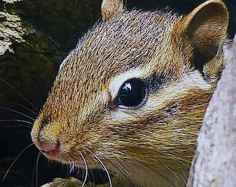 "Greeting Card ""Chipmunk 1 "" digitall enhanced nature photography - cute animals"