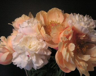 Last of the Peonies #1