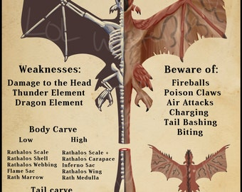 Monster hunter Rathalos Anatomy Poster