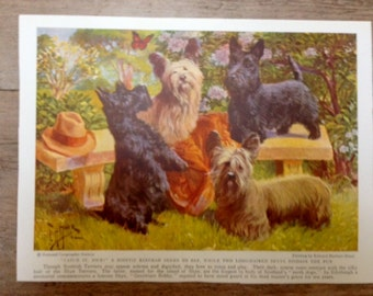 Vintage Skye and Scottish Terrier Scotty Scottie Dog Print 1936 Miner