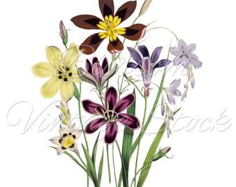 Floral Print, Floral Botanical Vintage Illustration INSTANT DOWNLOAD Digital Illustration for Print, digital artwork - 1489