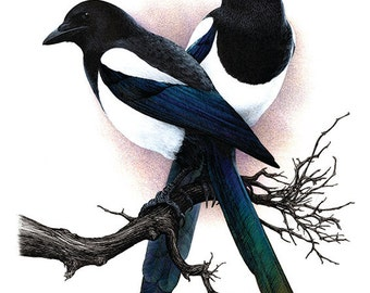 Magpies - Two for Joy. A3 limited edition art print
