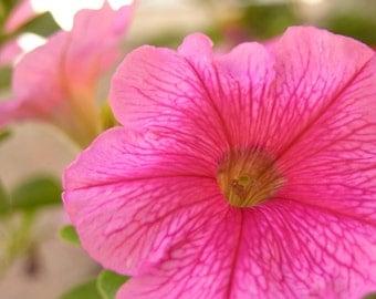 Pink Flower Garden Photograph #58
