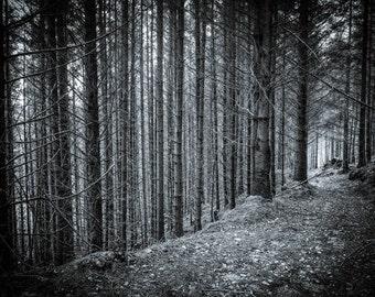 Quiet Forest, Flagstaff, Ireland