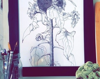 Sunflower Art Print Ink Drawing