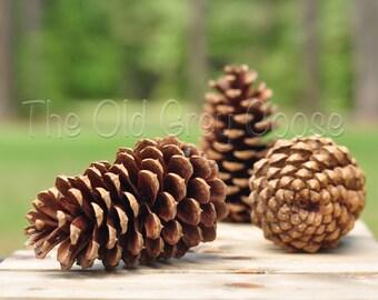 """Bulk Pine Cones / 200 ct / 3"""" - 4"""" pinecones"""