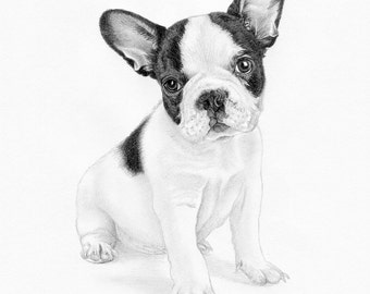 FRENCH BULLDOG puppy Limited Edition art drawing print signed by UK artist
