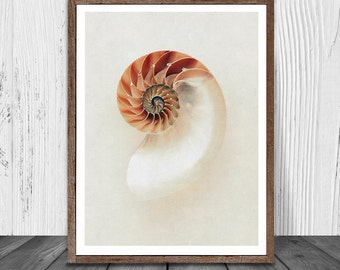 Seashell Print, Sea Shell Wall Art, Beach Decor, Soft Neutrals Decor, Nautical Prints, Painting Art, Digital Print, Instant Download