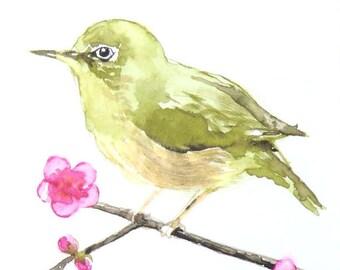 Japanese bush warbler & plum blossom, Original Watercolor