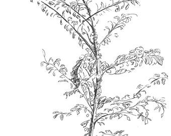 Line Drawing - Spurt