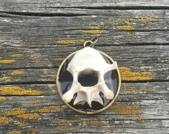 Animal Vertebre Bone pendant