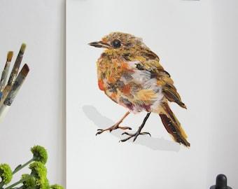 Garden Bird Print - Young Robin